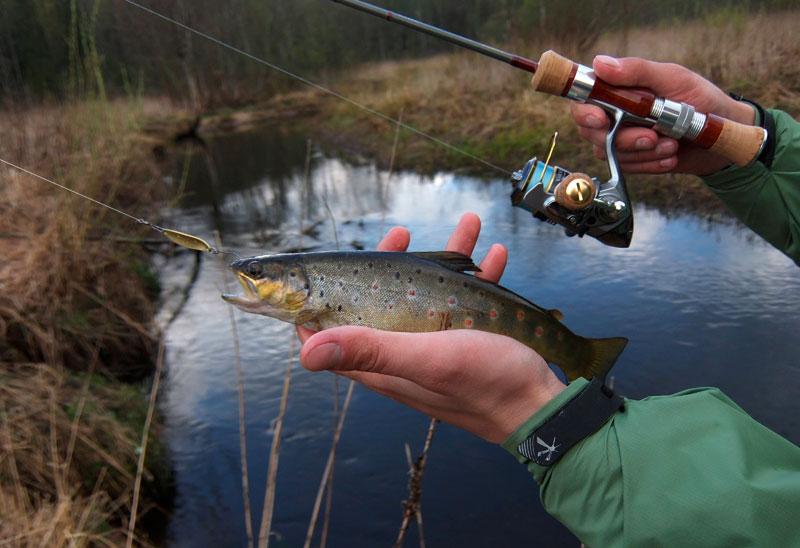Ловля форели спиннингом на колебалки на платниках - Рыбалка на спиннинг