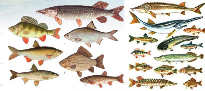 Пресноводная рыбалка в Крыму 2019 - форель, щука, карп, карась, сазан, окунь...