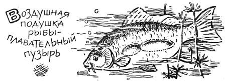 Влияние давления на воздушные пузыри рыб