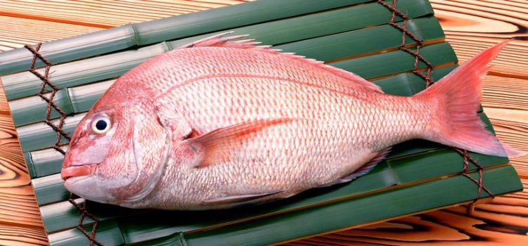 Польза и вред морского окуня для организма