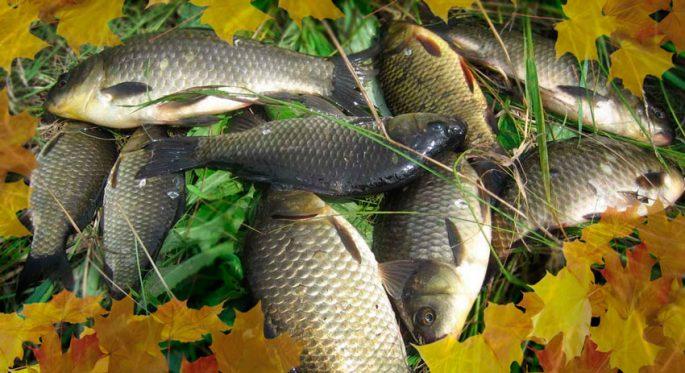 Ловля карася осенью
