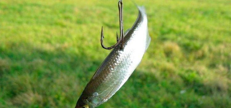 Крючок на судака