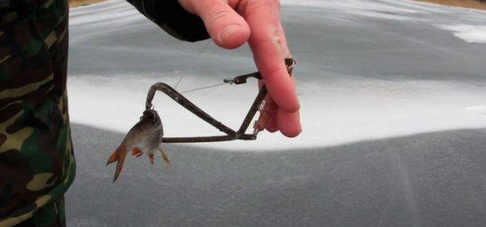 Способы насадки живца для ловли щуки