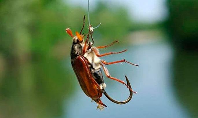 Оснастка для ловли на майского жука