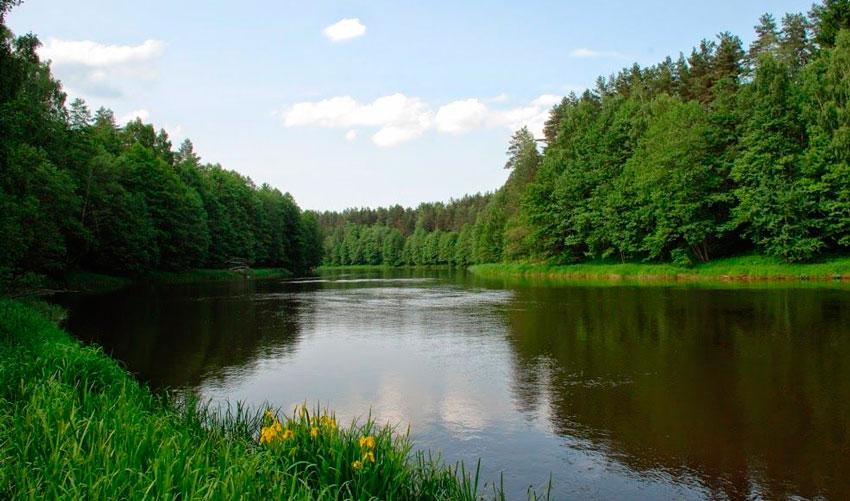 платные пруды для летней рыбалки