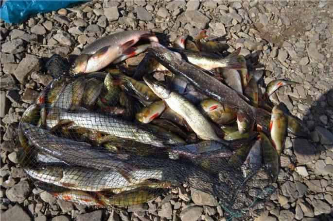 Рыба озер и рек Карагандинской области