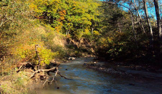 Река Седанка