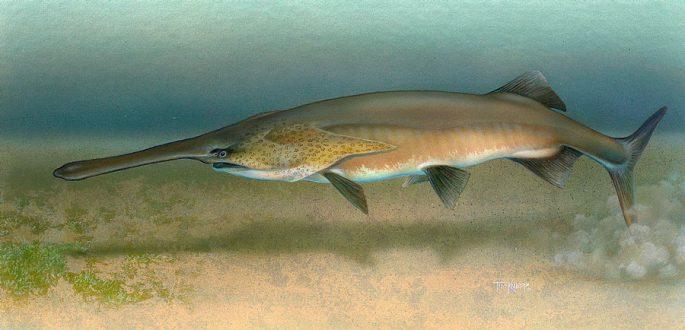 Рыба веслонос