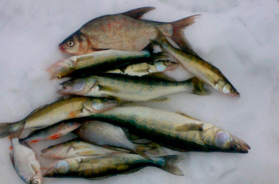 Особенности рыбной ловли на Яузском водохранилище зимой и летом