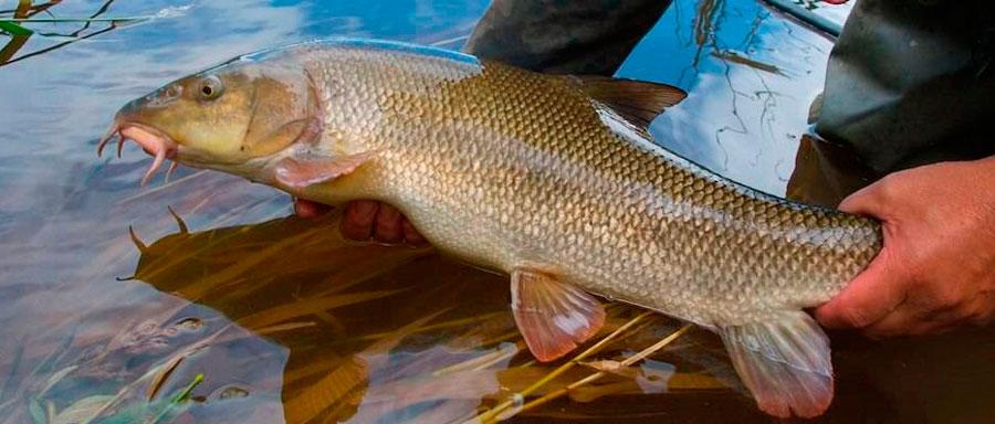 Где ловить рыбу на реке кубань