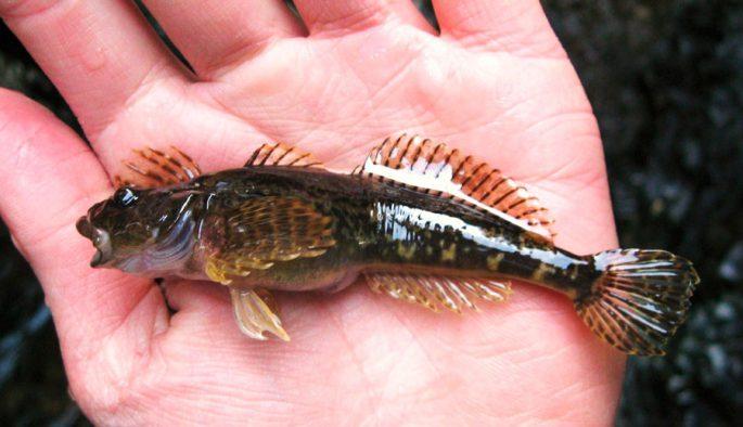 Хозяйственное значение рыбы