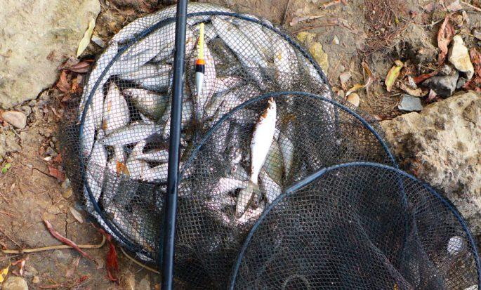 Ловля рыбы на поплавочную удочку весной