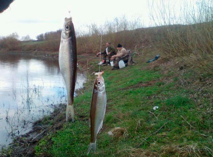 Особенности ловли весной