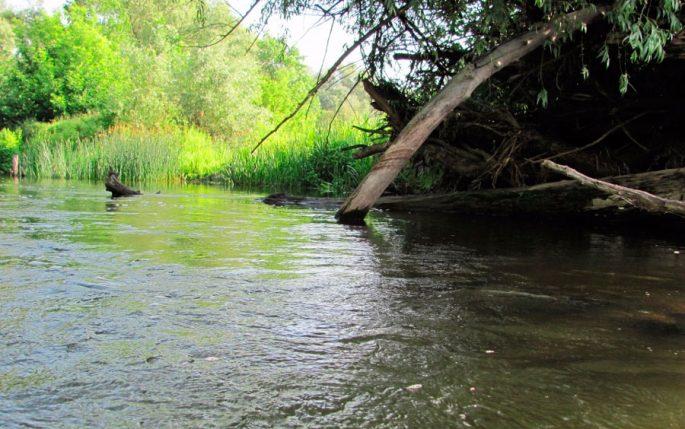 Как поймать жереха на малых реках