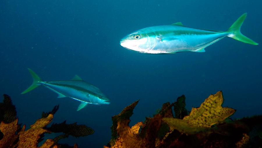 та, чувствуя лакедра рыба фото сложный-бежевый всегда добавлен