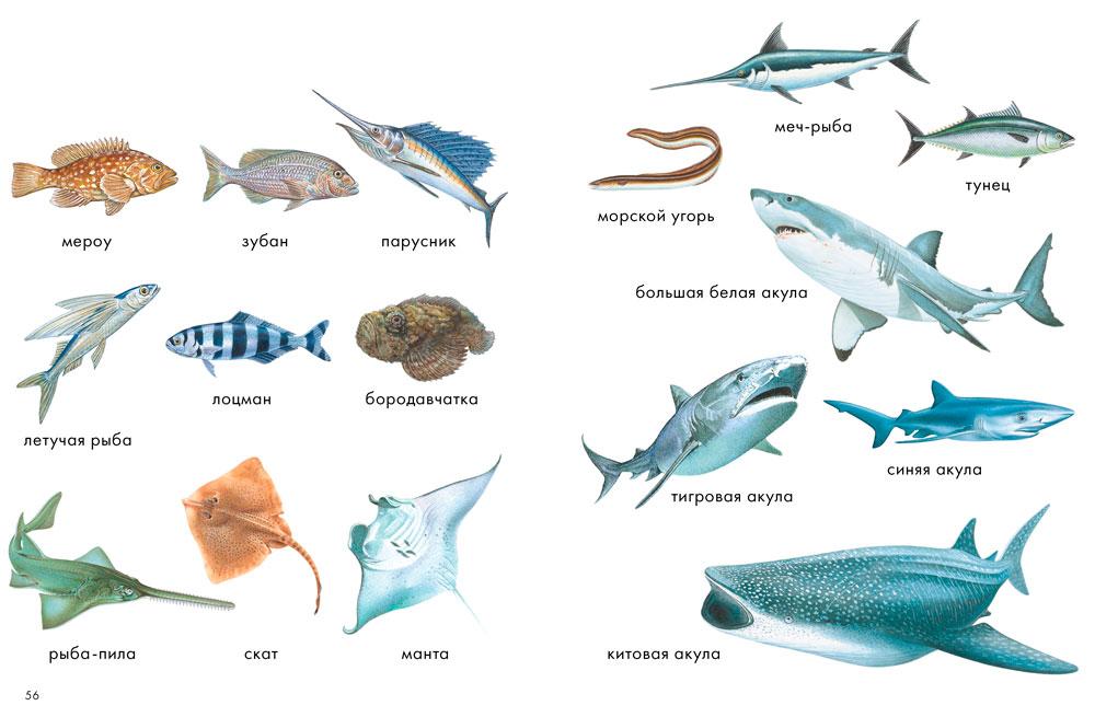 Рыбы название и картинка