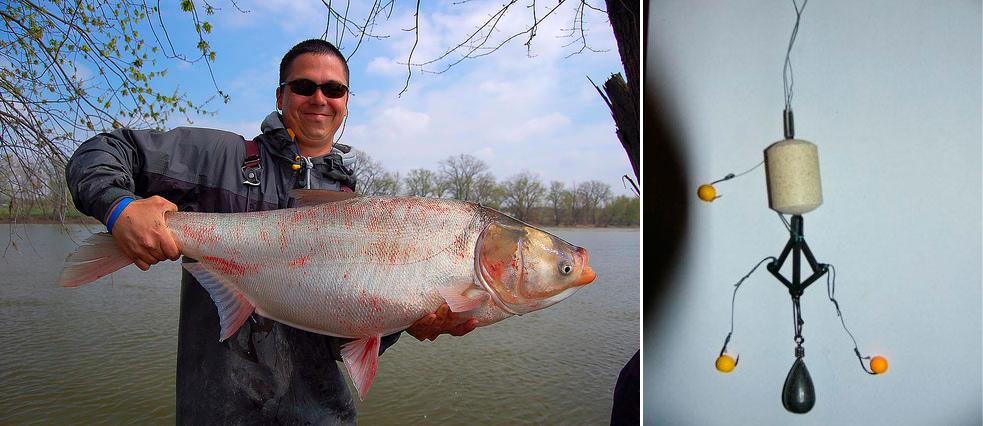 ловить толстолобика на реке кубани