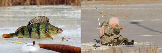 игра хищник рыба