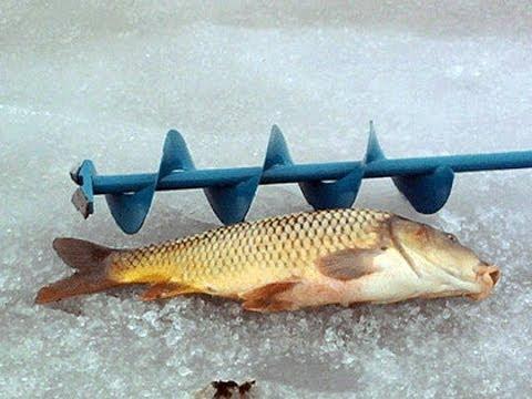 пшенка для прикормки рыбы