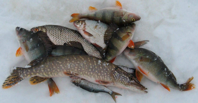 какую рыбу ловят на мане