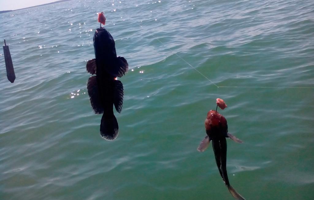 где ловить рыбу в витязево
