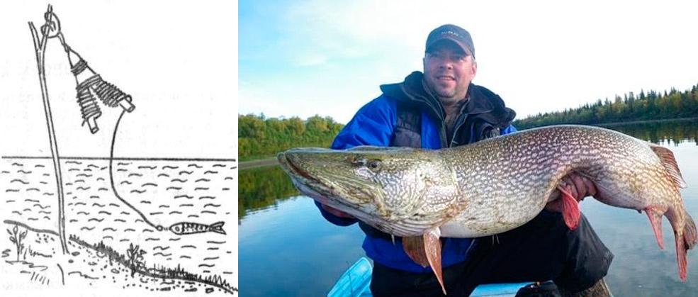 рогатка для рыбалки на живца