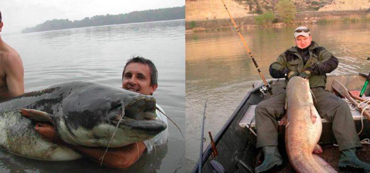 рыбалка на сома. снасти и приманки на сома