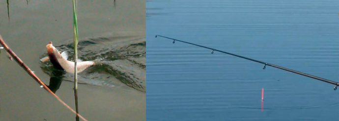 Все о рыбалке на карася в мае на поплавочную удочку