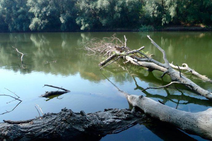 Рыбалка завалы коряжника