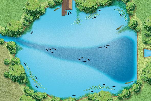 Как выбрать рыбное место на озере