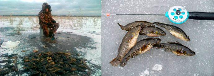 ротан рыбалка зима