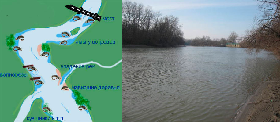 как ловить толстолобика на реке дон