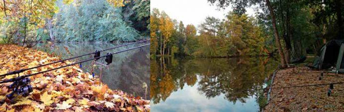 Ловля карпа осенью: в сентябре, октябрь, ноябрь