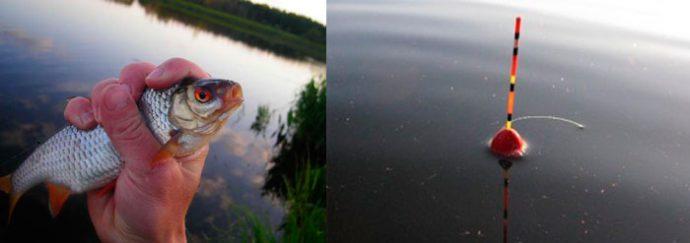 рыбалка на плотву на поплавочную удочку