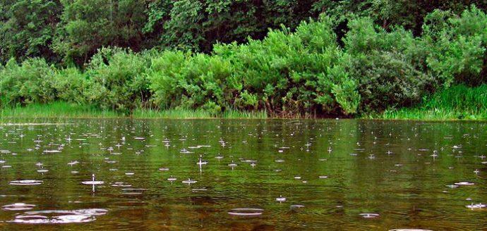 Прикормки для ловли карася летом на поплавочную удочку