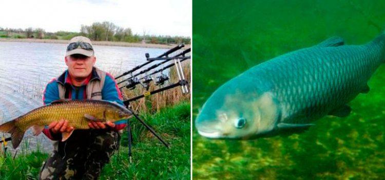 способы ловли рыбы летом
