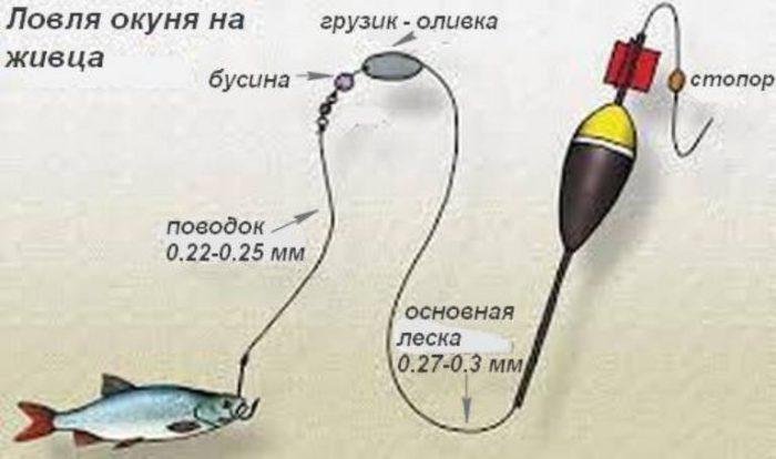 видео ловля судака летом на живца