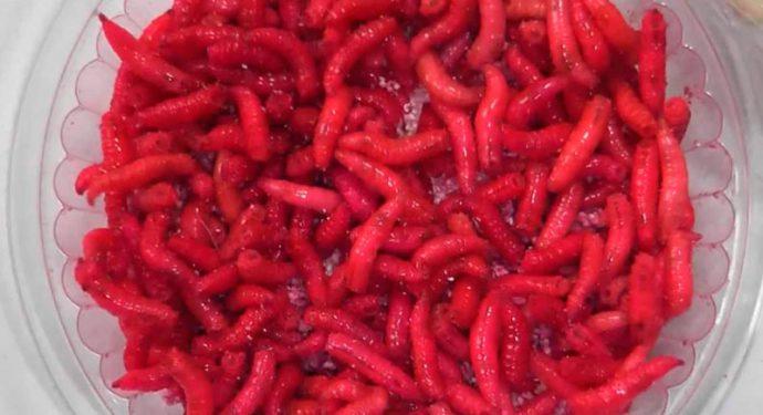красный опарыш