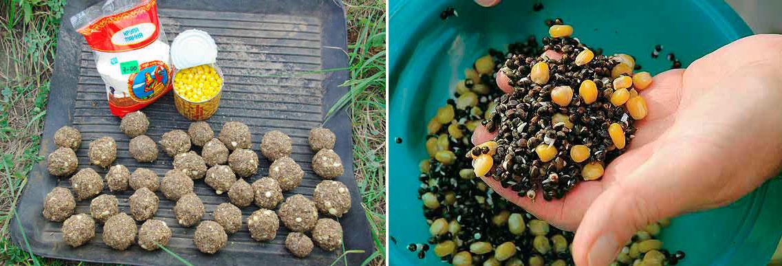 прикормка для сазана своими руками рецепты осенью