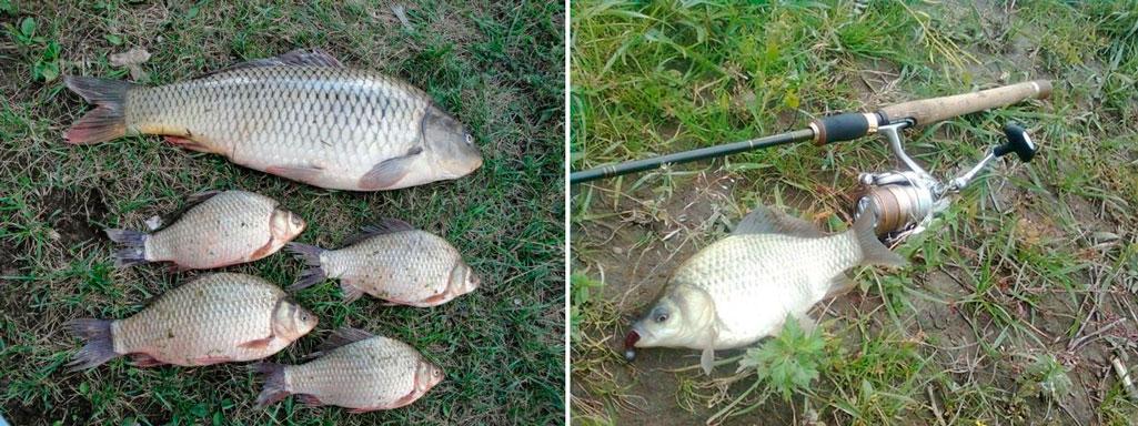 петербург рыбалка карась