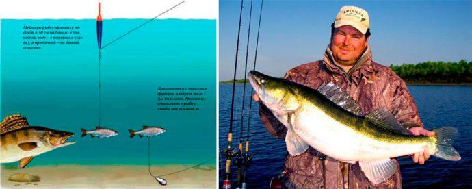 видео рыбалка на живца судак