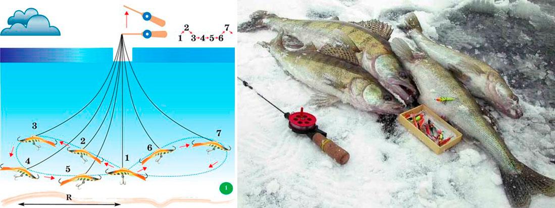 наша рыбалка судак на балансир
