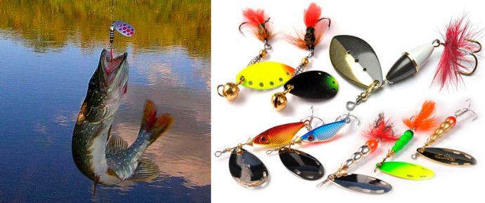 Ловля щуки в августе на спиннинг, кружки, поплавочную удочку