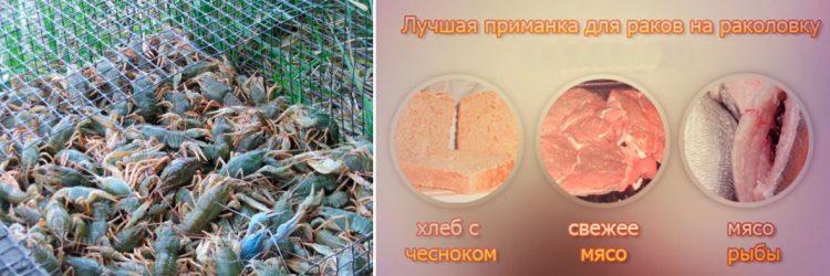 лучшая прикормка для ловли раков