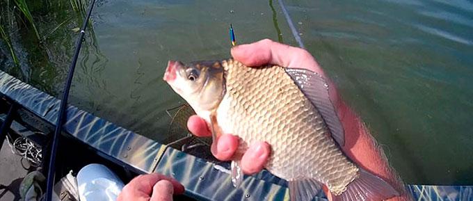 видео рыбалка на толстолоба