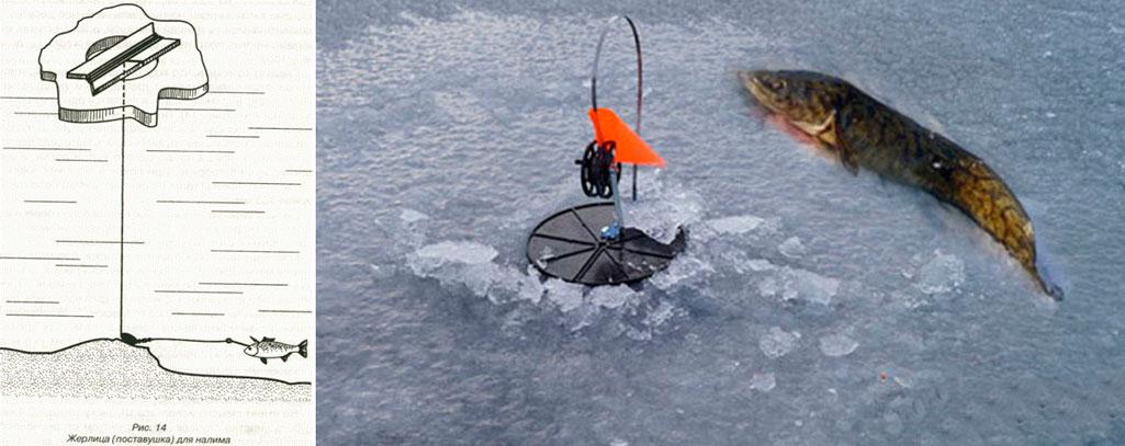 рыбалка снасти на налима видео