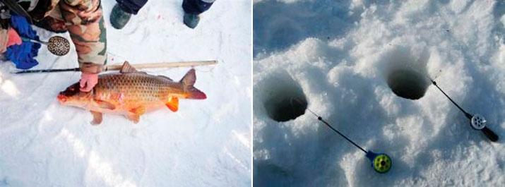 все о рыбалке и снастях для сазана