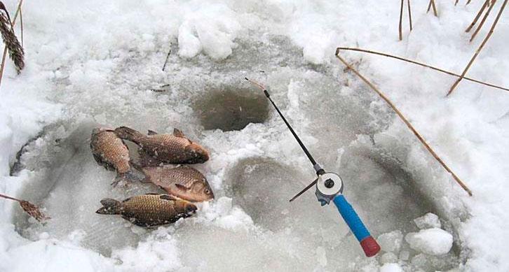 можно ли ловить рыбу подъемником в беларуси