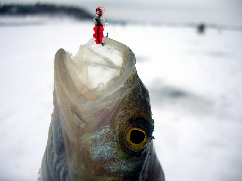 рыбалка на окуня на мормышку видео