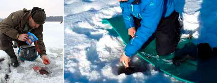 прикормка для сига зимой на кольском полуострове